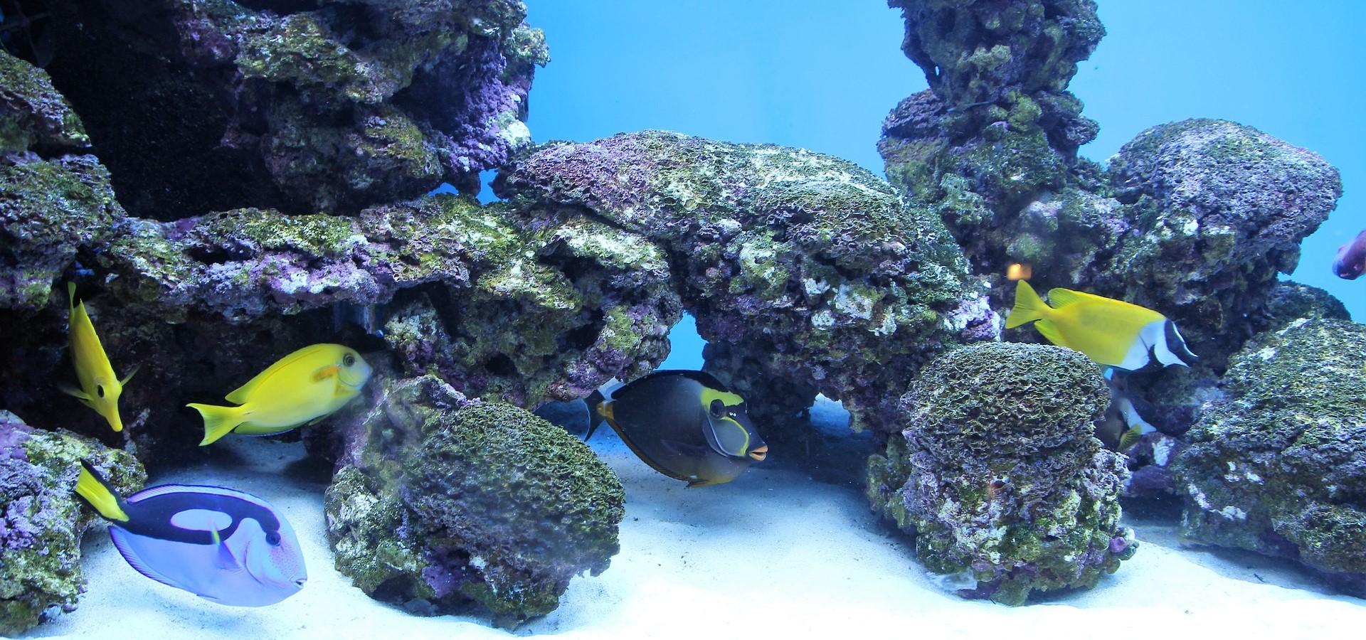 Aquarium - Top 10 & Kaufberatung